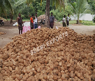 Susmi Exports - Coconut Exporters in India